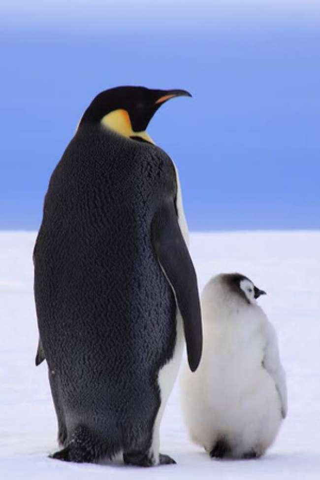 夜行性ペンギン